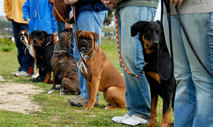 Five Rings Dog Training - Hanson: $50 for $100 Worth of Obedience Training — Five Rings Dog Training