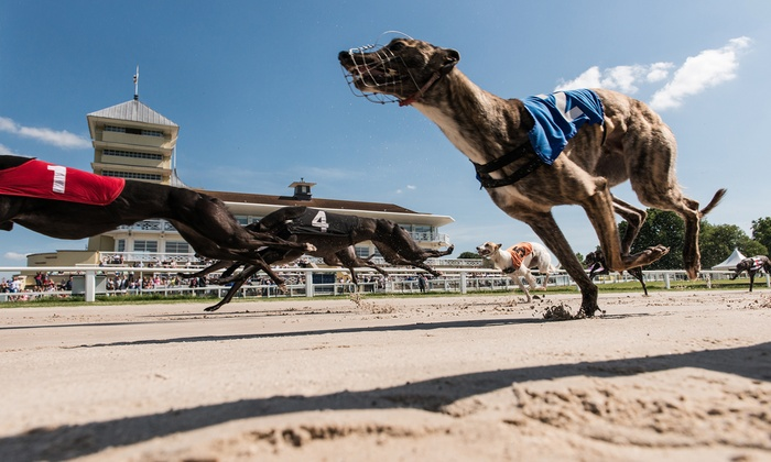 Towcester Racecourse - Towcester: Greyhound Racing with Food, Drink, Programme and £2 Bet for Up to Ten People at Towcester Racecourse (Up to 61% Off)