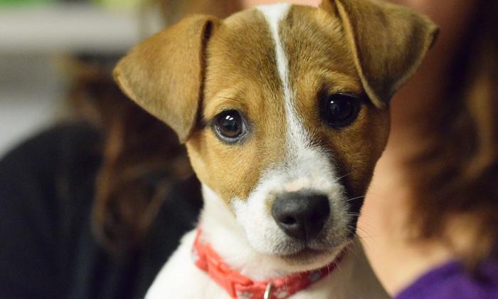 Collinsville Veterinary Hospital - Collinsville: $21 for $39 Worth of Pet Care — Collinsville Veterinary Hosp