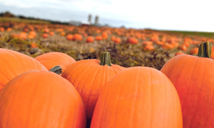The Patch at The Farm - Edgerton: Fall Festival with Hayride and Pumpkins for Two, Four, or Six at The Patch at The Farm (51% Off)