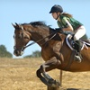 56% Off Horseback-Riding Lesson