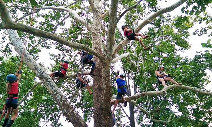 EarthJoy Tree Adventures - AJ Jolly Park: Tree-Climbing Adventure for Two, Four, or Six from EarthJoy Tree Adventures (Up to 52% Off)