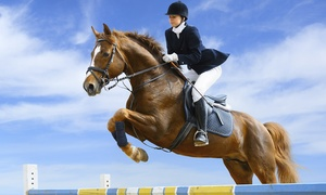 Les Ecuries de La Burgue: Stage d équitation à cheval d'une demi journée pour 1 ou 2 personnes dès 45 € aux Ecuries de La Burgue