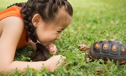 Reptile or Small Animal Experience for One or Two Children at Viaduct Sanctuary and Petting Zoo