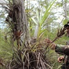 Up to 58% Off a Hiking Tour of the Everglades