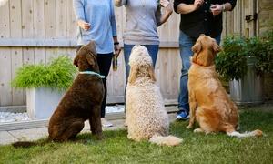 Centro Cinofilo Dog Paradise: Fino 10 lezioni di educazione cinofila o corso addestramento cinofilo - Centro Cinofilo Dog Paradise (sconto fino a 90%)