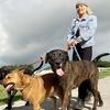 43% Off Dog Walks
