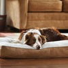 $25 for an Animal Planet Memory-Foam Dog Bed