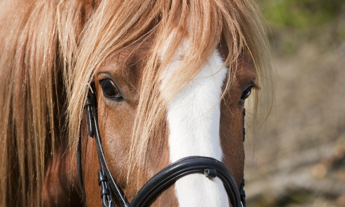 High Point Stables - Palm Beach Farms: One-Hour Horseback Trail Ride for One, Two, or Four at High Point Stables (Half Off)