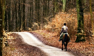 Arlington Equestrian Center Ins.: $100 for $150 Worth of Horseback Riding — Arlington Equestrian Center Ins.