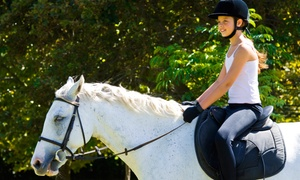 Fantasy Farms Equestrian Center: $22 for a 30-Minute Private Beginners' Horseback-Riding Lesson at Fantasy Farms Equestrian Center ($45 Value)