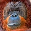 Up to 40% Off Admissions to Suncoast Primate Sanctuary