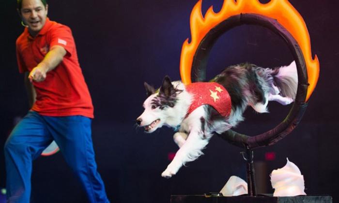 Chris Perondi's Stunt Dog Production - Akron Civic Theatre: Chris Perondi's Stunt Dog Experience on Wednesday, April 20, at 7:30 p.m.