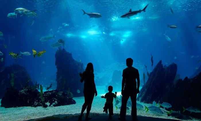 Free Days At Shedd Aquarium In Chicago Il Livingsocial
