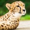Up to 26% Off at Wildlife Safari
