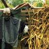 Half Off Hillside Horror Haunted-Farm Visit