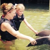 39% Off Dolphin Encounter at Dolphin Cove