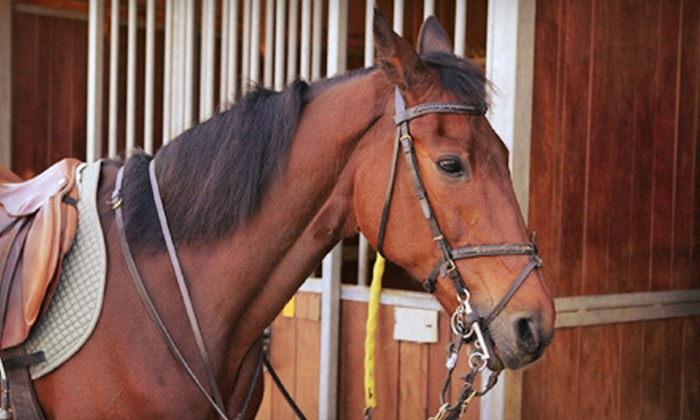 Denver Equestrians - Columbine Knolls South: Horseback-Riding Lessons at Denver Equestrians (Up to 73% Off). Five Options Available.