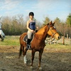 Up to 53% Off Horse-Riding Lessons in Jefferson