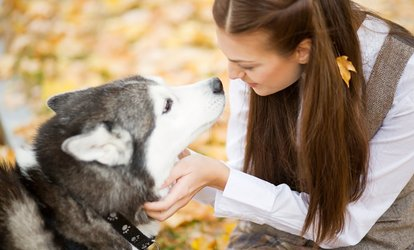 Five or Ten Doggy Daycare Visits at Puppywood <strong>Pet</strong> Resort (Up to 59% Off)