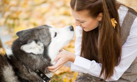 2 o 4 clases colectivas de adiestramiento canino desde 16,95 € en Servicios Caninos