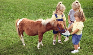 Kathbern Stables: Pony Care and Riding ExperienceFor One or Two Children at Kathbern Stables