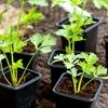 44% Off Gardener