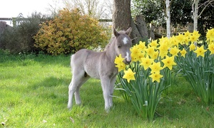 Miniature Pony Centre: Entry for Two Adults, One Adult and One Child or a Family of Four to Miniature Pony Centre (50% Off)