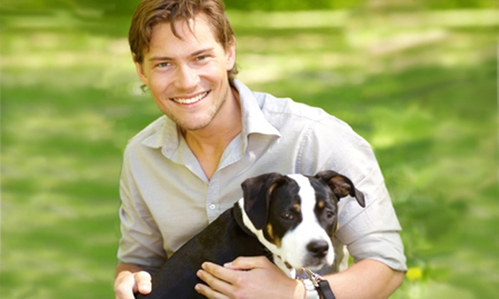 DogVacay - Boston: Home Dog Boarding from DogVacay (Up to Half Off)