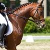 Clases de equitación -85%