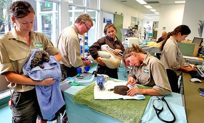 Currumbin Wildlife Hospital Foundation: Donate $5, $10, $20, $90 or $350 to Help Save Sick and Injured Animals