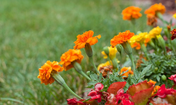 The Plant Station Greenhouse Inc. - Grand Chute: $21 for $40 Worth of Plants and Garden Accessories at The Plant Station Greenhouse Inc.