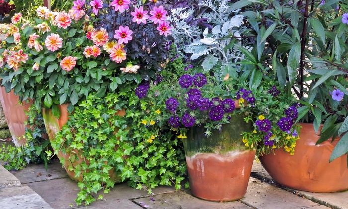 Petals Couture - North Jersey: $36 for $65 Worth of Plants — Petals Couture