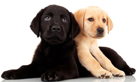 $29 for $50 Toward Grooming at Gilbert Dogs 24/7 & Chandler Dogs 24/7