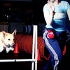 Up to 53% Off Dog Gym Sessions or Training