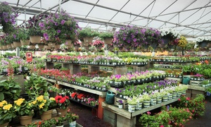 Williams Nursery: $18 for $30 Worth of Flowers, Shrubs, Gifts and More at Williams Nursery