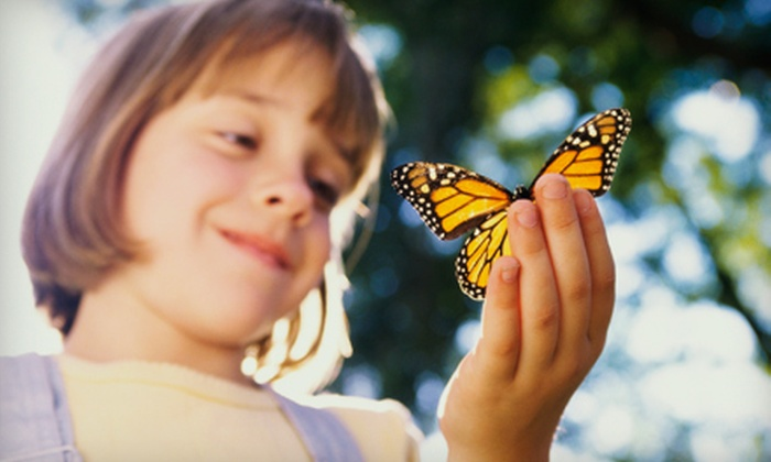 The Butterfly Charities - Brick: Butterfly-Sanctuary Visit for 2 or 4 or Birthday Party for Up to 10 at The Butterfly Charities (Up to 51% Off)