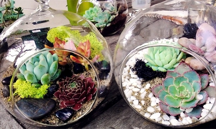 Terrarium-Making Class - Matter of Trust: Make Your Own Terrarium with Robust Succulent Plants