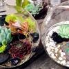 Create a Terrarium at Thimbleberry House