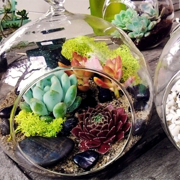 Personalized Terrarium Making Class In Los Angeles Ca Groupon
