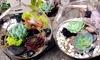 One-Hour Easter Terrarium Making Class - Washington: Build Your Own Easter Terrarium with Succulents