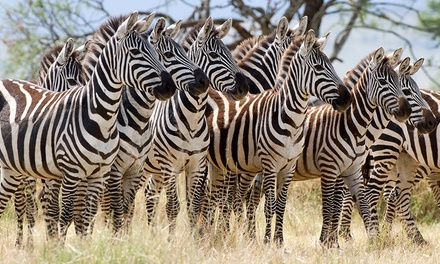 Tanzania: 3 to 5 Night Safari With Meals and Activities*