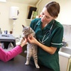 53% Off Veterinary Services