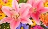 7-Pack of Oriental Lilium XL Bulbs: 7-Pack of Oriental Lilium XL Bulbs