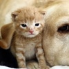Up to 62% Off Pet Boarding or Vet Exams
