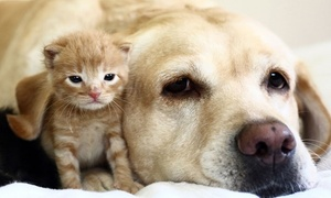 Homestead Animal Hospital: Pet Boarding, or a Vet Exam for a Puppy or Kitten or an Adult Pet at Homestead Animal Hospital (Up to 62% Off)