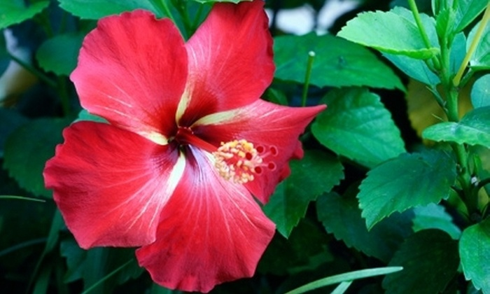 Flamingo Road Nursery - Davie: $15 for $30 Worth of Plants, Pottery, and Gardening Goods at Flamingo Road Nursery