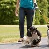 Dual Doggie Retractable Leash