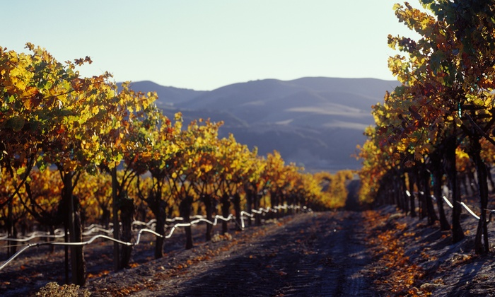 Boutique Wine Tours - Napa / Sonoma: $10 Buys You a Coupon for 15% Off a Wine Tour for Six People With Boutique Wine Tours