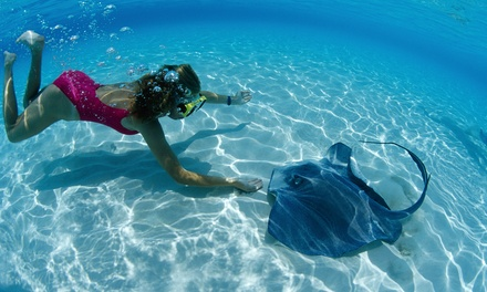 $33 for a Pirate Snorkel Adventure and Admission at Long Island Aquarium (Up to $65.45 Value)